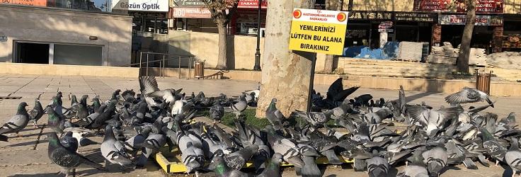 Sokak kısıtlamasında sokak hayvanlarını unutmadılar